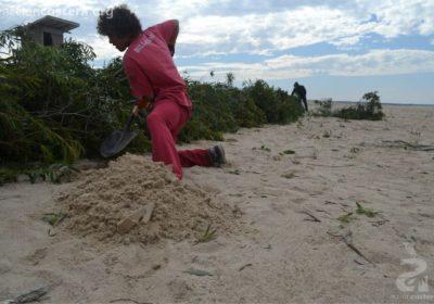 Recuperación y gestión costera en La Pedrera y Punta Rubia